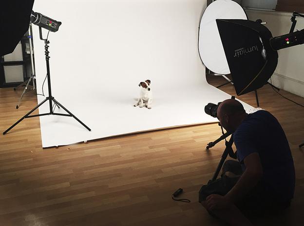 Los perros se portan mejor en el estudio de fotografía.